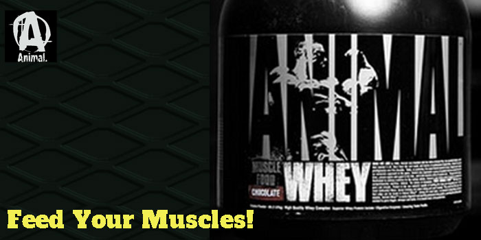Animal Whey – Quality at an affordable price!